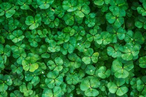 clover-1225988_960_720